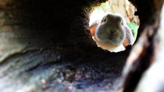 rabbit-hole-1